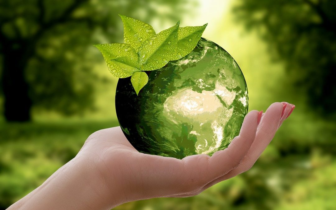 Green jobs – where are they and which skills are most needed by today's green employers?